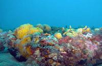 tegnue_chioggia_sottomarina